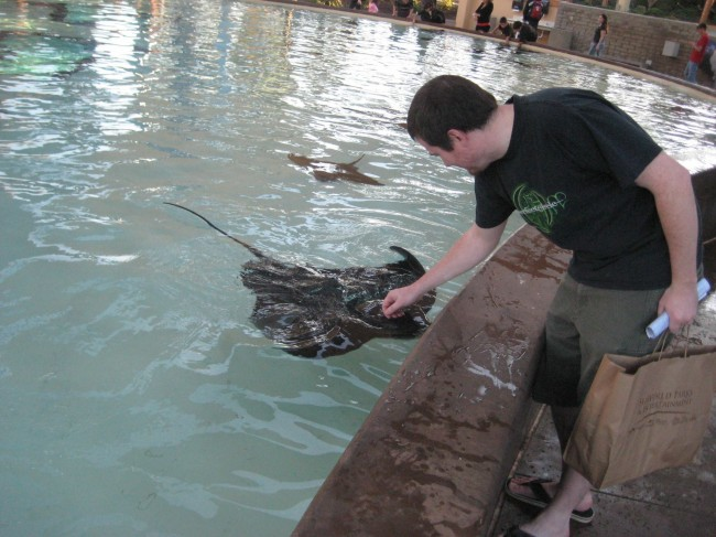 Petting a sting ray. They are surprisingly friendly and love attention.