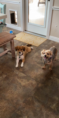 We also have two pups, Millie is on the left and Canton on the right. They're affectionately called
